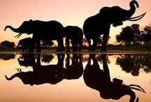 Elephants are Totally Awesome