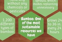 Facts about Bamboo / Infographics featuring interesting facts about bamboo. / by Bum Boosa