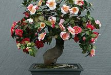 Blooming Bonsai