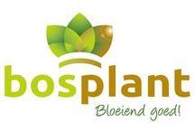 Nursery Bosplant assortment / www.bosplant.nl