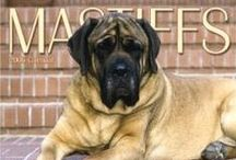 Puppy Love / I love dogs! But when I get back on my feet I want Mastiffs. How could you not love those faces?