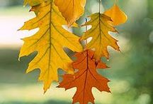 Fall Decor and Recipes