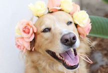 Pets at the Wedding? You bet! / They are member of your family so naturally they can be included.