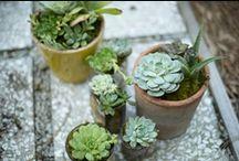 | jardin | / by Emma Case