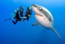 Underwater / by charley mccoy