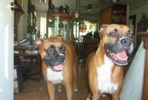 for my Boxer dogs / boxers / by Polly Beard