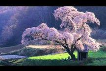 Japan / by Harumitsu Asai
