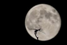 Moon / by Harumitsu Asai