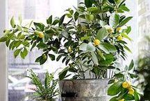 «« Plants + Plant Life »» / Plants...all about plants.