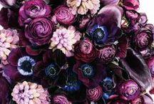 Flora, flowers & bouquets