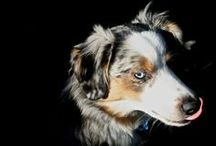 Fionn the Australian Shepherd