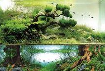 Fish &Fishtanks