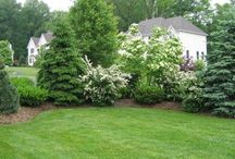 Evergreen Landscaping