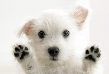 Puppy Love / is there anything cuter than a tea tiny puppy?  / by Tejae Floyde