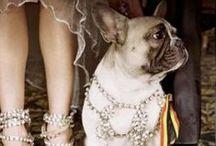 Posh Pets / PoshPets should live like royalty. / by PoshLiving