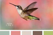 Colors / Color Scheme