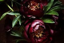 Dark & Moody Weddings / Not one for pastels? This board is all about deep luscious jewel-tones and the endless romance of shadows. Whether you are looking for ideas for an autumn wedding, or you are planning an all-out Gothic wedding, let us inspire you.
