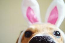 bunny dogs
