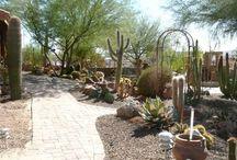home: back yard
