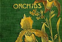Orchidaceae, Orkhis, Orchids / A collection of Orchids: From New Latin Orchideae, family name, from Latin orchis, a kind of orchid, from Greek orkhis, testicle, orchid (from the shape of its tubers.) / by Deborah DiClementi