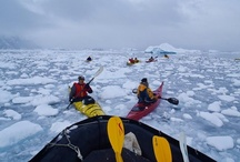 Antarctica / by Quark Expeditions