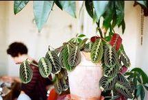 Houseplants / Potted plants, window boxes, terrariums and flower bouquets and arrangements / by Jackie LP
