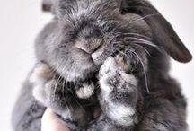 < Bunnies > / by Katie Karl