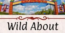 Wild About: Disney World / Magic Kingdom, Hollywood Studios, Epcot, and Animal Kingdom. More Disney love!