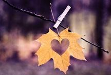 fall inspiration / by Courtney Lynn