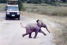 Elephants / by Brooke Peal