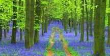 Settings: Trees & Forests / Woods, trees and whispering leaves; winding paths where stories weave