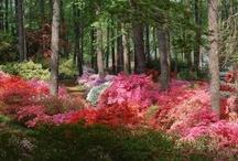 Glorious Gardens / by Phillis Mullin