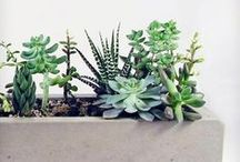 Green Thumb / The gardens of my dreams.