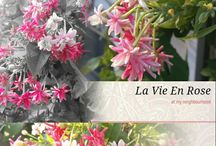 La Vie En Rose / Life through pink glasses, where everything appears rosy and cheerful