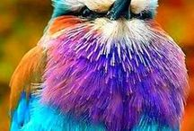 big.bold.birds