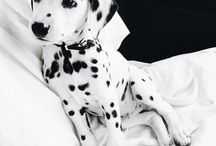 || No Evil Thing Will || / 101 Dalmations