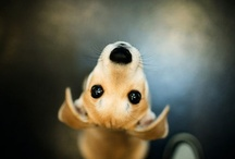 Type of Photogrphy that I LOVE / by Kristine Velderrain