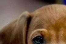 Puppies / by Kristine Velderrain
