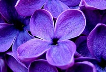 Purple / Purple in all it's variations