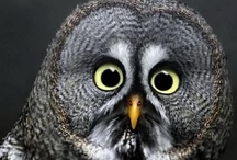Owl Love You Forever... / Obsessed with owls...