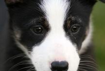 Dog Love!!!