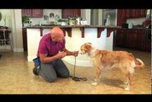 Joel's Training Tips / Do you want to teach your dog a new trick? Spend some time watching dog training by Joel Silverman with his best friend Fido, as they teach you the best ways to train your furry friend! #PetTrainingTips