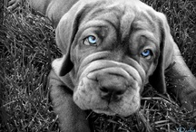 Puppy Month / Bil-Jac has compiled the cutest furry friends and puppies on the internet! For more adorable dogs, tips and Bil-Jac exclusives, visit us at www.bil-jac.com. #Puppy #NationalPuppyMonth