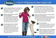 Did You Know... / Bil-Jac has gathered some uncommon facts you need to know about YOUR dog and best friend! Click through our Pins for some great pet health, pet safety and pet training tips that will help you & your best friend live happily together!
