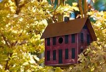 Birdhouses / by Indiana Chick