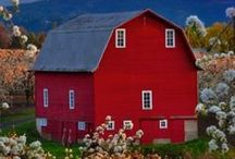 Barns / by Indiana Chick