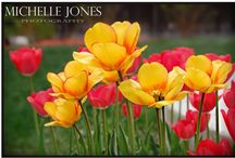 Picture and Photography / by Michelle Jones