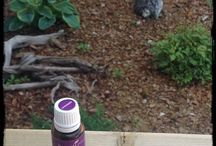 Oily life! / Essential Oils, I sell Young Living.