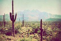 :: desert dreams ::