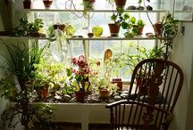 House plants / Bringing nature indoors.